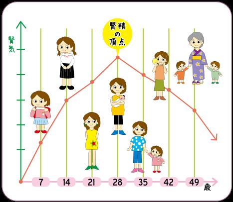 女性の一生は7の倍数