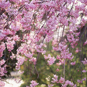 季節の養生法●春●